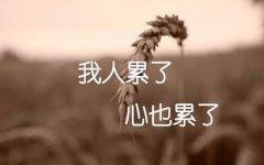心冷了人累了的说说_树叶不是一天黄的,人心不是一天凉的