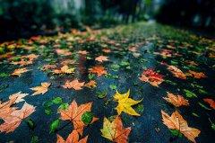 关于秋雨的心情说说 秋雨绵绵,听着歌品味多彩的人生。
