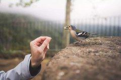 学会释怀把一切看淡唯美句子 人生如过眼云烟,活在当下才是明智的选