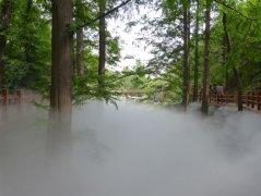 有雾早晨的心情说说—描述看雾心情好的句子