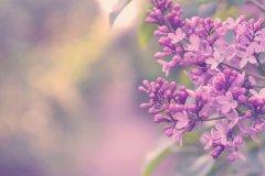 关于花的唯美意境句子 描写花意境的优美句子