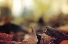 美到心痛的句子 有深度有品味的句子