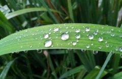 关于下雨天的唯美句子 下雨的有意境的短句子