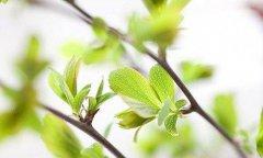 形容春天的句子—形容春天的句子有哪些
