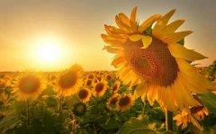 工作心态正能量句子—阳光心态正能量