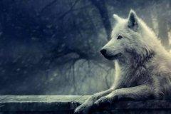 狼的霸气格言 狼的励志名言短句霸气