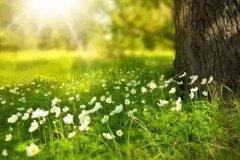 心态好的句子正能量 生活阳光积极向上的句子