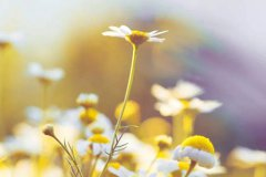 朋友圈发春游的心情 春游发朋友圈的精美句