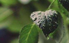 喜欢下雨天的心情说说 下雨了想发个朋友圈