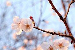 春暖花开好心情的说说-表达心情好的说说