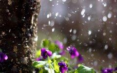 形容下雨天的唯美句子 下雨的有意境的短句子
