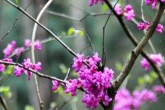桃花的唯美句子 描写春天桃花盛开的句子