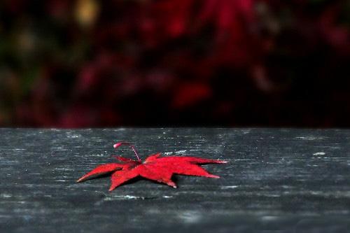 心情失落的说说 心情失落难过的伤感说说