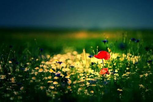 简短一句话早安心语 一天一句心情早安语