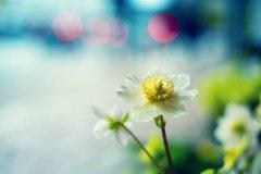 相遇是一种缘分的美句 遇见是一种缘分的短语