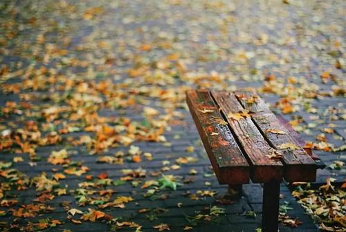 秋雨的句子 秋雨的句子简短唯美