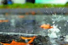 秋雨的说说句子 秋雨的句子简短唯美