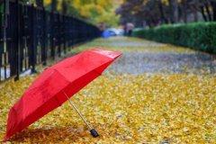秋雨的说说 秋雨的句子简短唯美