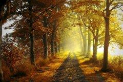 秋天的早晨说说 初秋的早晨的精美句子