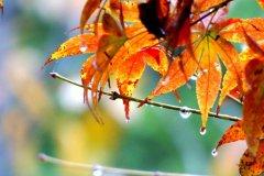 秋雨说说心情短语-一场秋雨一场寒_QQ心情短