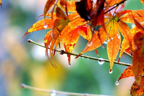 秋雨说说心情短语-一场秋雨一场寒_QQ心情短语