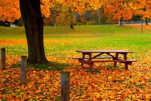 关于秋天的句子唯美 秋天的句子短一些唯美