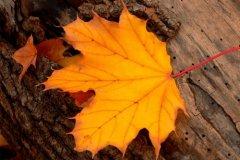 描写秋天的句子-形容秋天的优美句子