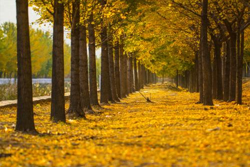 秋天的句子-形容秋天的句子大全