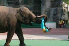 比喻大象身体很重的比喻句-怎么用比喻句说明大象的身子很重?