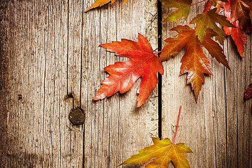 秋天落叶的句子-写秋天落叶的优美句子