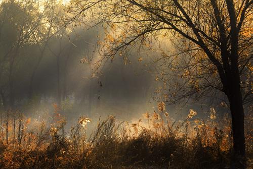 秋日暖阳的优美句子-描写秋日阳光的句子