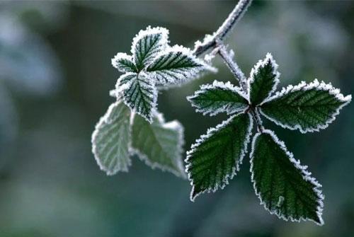 霜降的谚语-关于霜降的谚语或诗句