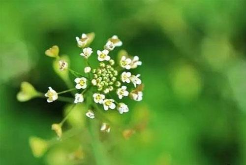 人生最美是淡然经典语录-人生最美是淡然看淡一切