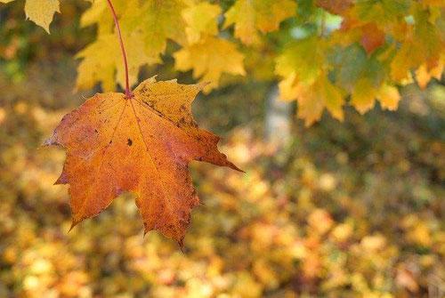 秋天的句子短句唯美-秋天唯美至极的一句话