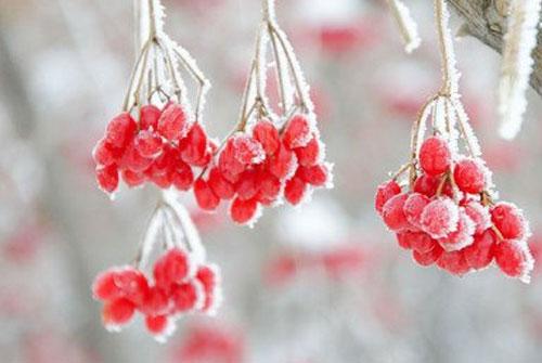 霜降谚语-霜降的谚语关于霜降节气农谚有哪些