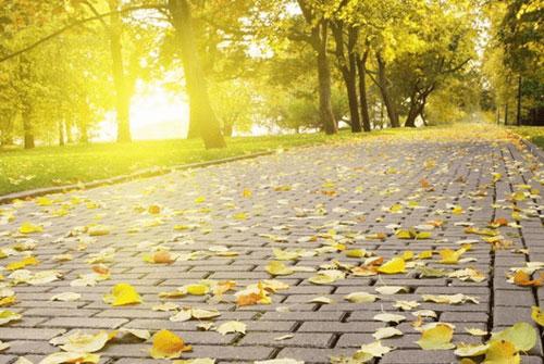描写秋天的句子-描写秋天的唯美句子