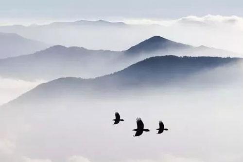 飞鸟集经典语录100条-泰戈尔飞鸟集经典语录
