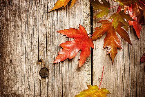 形容落叶的句子唯美-形容秋天落叶的唯美句子语录
