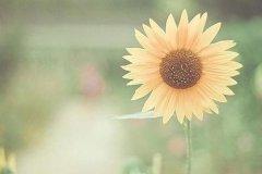 早上发圈的句子-适合早上发圈的积极句子充满能量和希望的早安心语