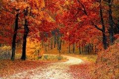 秋意凉的句子-形容金色秋季的句子一层秋雨