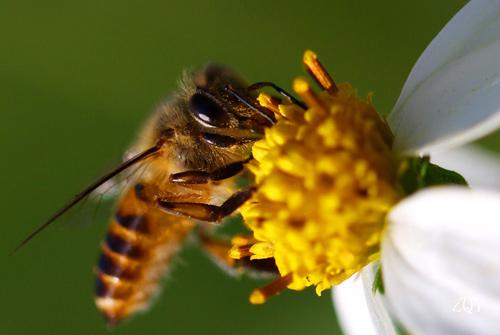 昆虫记好词好句 昆虫记读书笔记摘抄好词好句