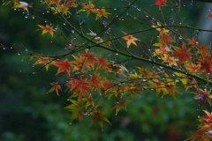 秋雨的诗句-秋雨绵绵的唯美诗句