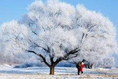 雪花像什么的比喻句 把雪花比喻成什么最合
