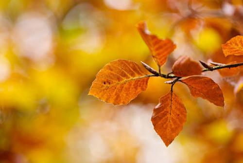 秋天浪漫的诗句-秋天的浪漫的诗句大全