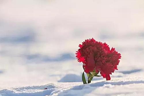 伤感情话长句-表白情话最暖心长句最经典的伤感词语