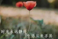 人生感悟句子说说心情-感悟人生的经典句子