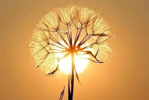 人生励志的句子-正能量的人生励志句子