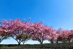 春风像什么一样比喻句 春天像什么的比喻句