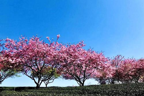 春风像什么一样比喻句 春天像什么的比喻句仿写句子