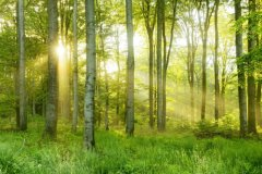 保护树木的宣传语 呼吁大家保护树木的句子